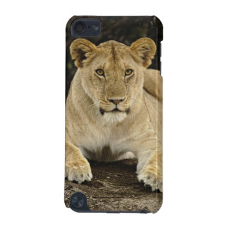 Lion, Panthera leo, Serengeti National Park, iPod Touch 5G Covers