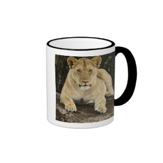 Lion, Panthera leo, Serengeti National Park, Mug