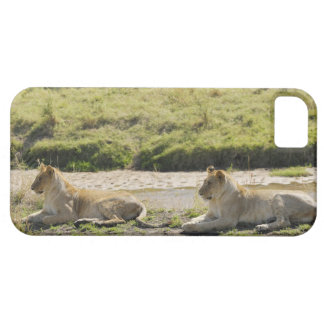 lion (Panthera leo),two young lioness, Masai iPhone 5 Case