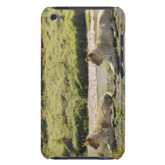 lion (Panthera leo),two young lioness, Masai iPod Case-Mate Case