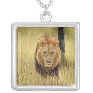 Lion (Panthera leo) walking in a forest, Silver Plated Necklace