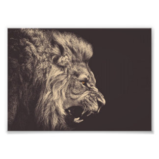 lion pencil art lion roar black and white photo print
