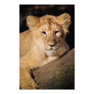 Lion Personalized Stationery