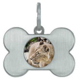 Lion Pet Name Tag