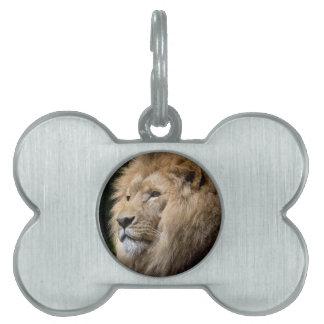 Lion Pet Tag