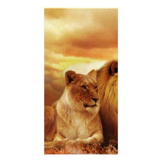 Lion Photo Card