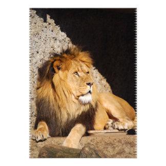 Lion Photo Invitation