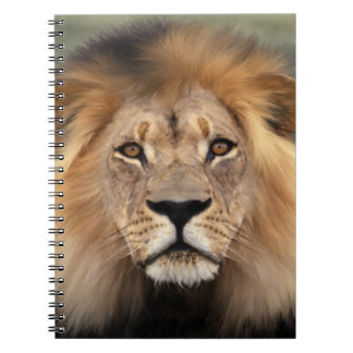 Lion Photograph Notebooks