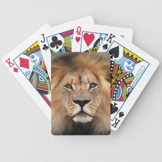Lion Photograph Poker Deck