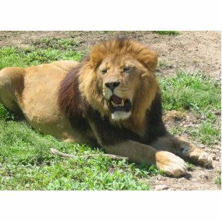 Lion Photo Sculpture Magnet