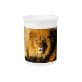 Lion Pitcher