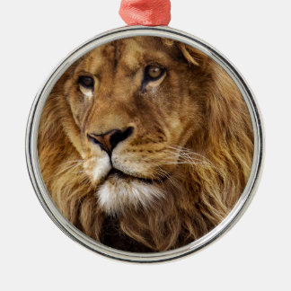 Lion portrait christmas ornament