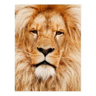 Lion Portrait Postcard