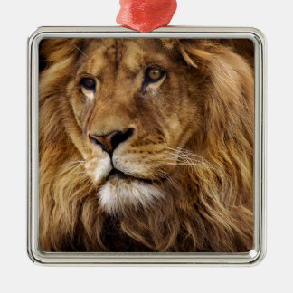 Lion portrait Silver-Colored square decoration