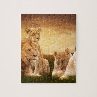 Lion pride puzzles