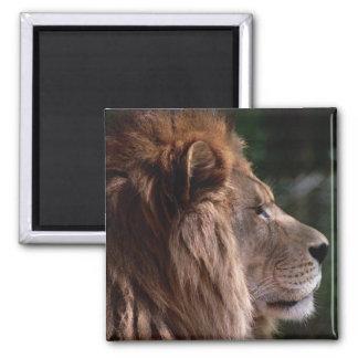 Lion profile square magnet