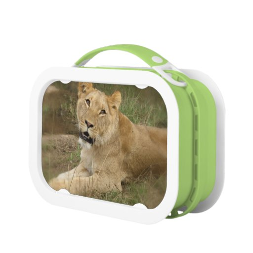 Lion Prowl Lunch Box
