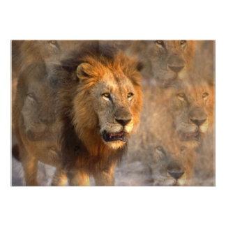 Lion Reflections Invitation