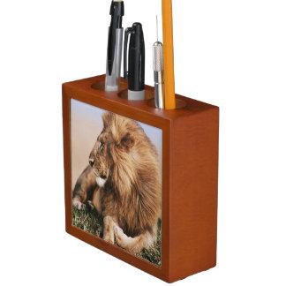 Lion resting in grass desk organiser
