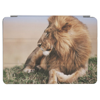 Lion resting in grass iPad air cover