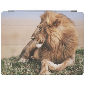 Lion resting in grass iPad cover