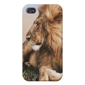 Lion resting in grass iPhone 4/4S cover