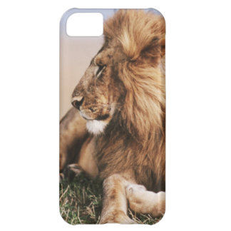 Lion resting in grass iPhone 5C case