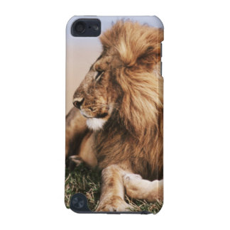 Lion resting in grass iPod touch 5G covers