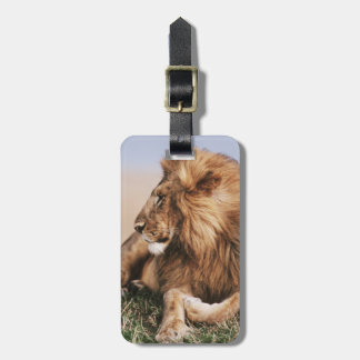 Lion resting in grass luggage tag