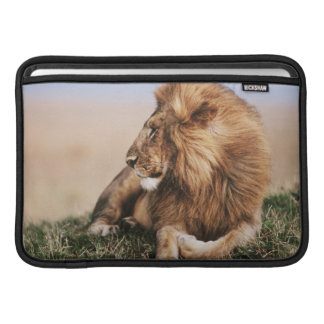 Lion resting in grass sleeve for MacBook air