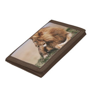 Lion resting in grass trifold wallet