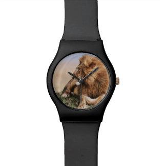 Lion resting in grass watch
