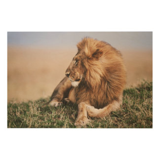 Lion resting in grass wood wall decor