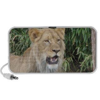 Lion Roar Speakers