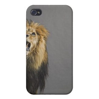Lion roaring cover for iPhone 4