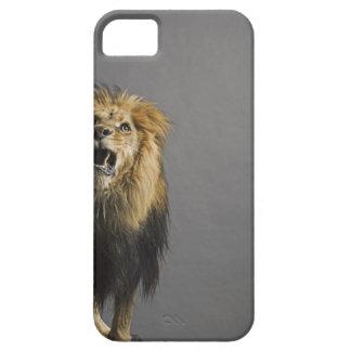 Lion roaring iPhone 5 cases