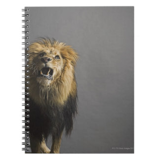 Lion roaring spiral notebook