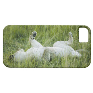 Lion rolling in the tall grass, Africa Barely There iPhone 5 Case