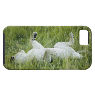 Lion rolling in the tall grass, Africa Case For The iPhone 5