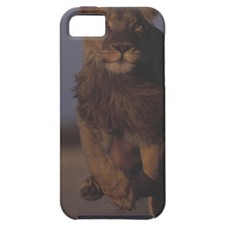 Lion Running iPhone 5 Covers