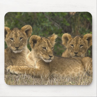 Lion Siblings Mouse Mat