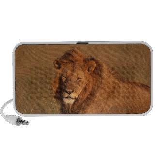 Lion Mini Speakers