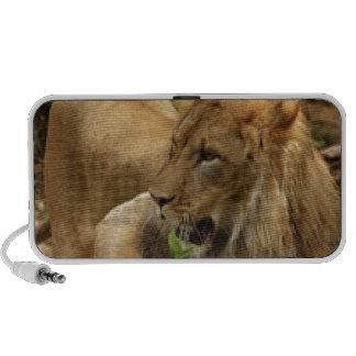 Lion Speakers