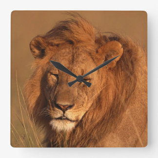 Lion Square Wall Clock