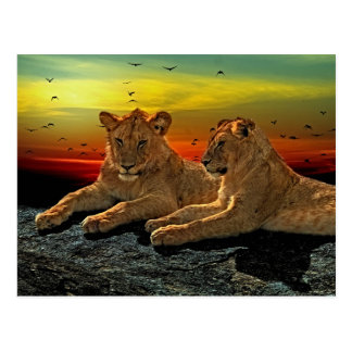 Lion Style Postcard