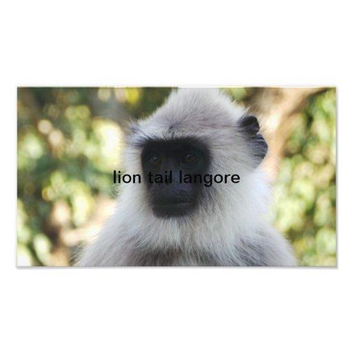 lion tail langore photograph