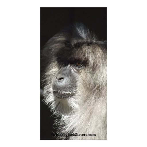 Lion-Tailed Macaque Portrait Photo Greeting Card