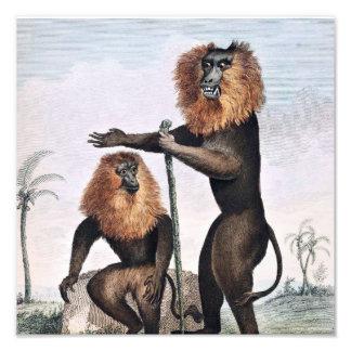 Lion Tailed Monkey Drawing Photo Art