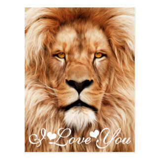 Lion The King Photo Painting I Love You Postcard