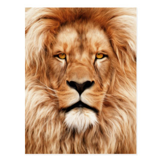 Lion The King Photo Painting Postcard